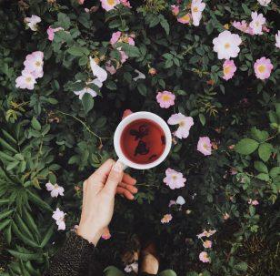 🌸春暖花開 喝茶正好🌸